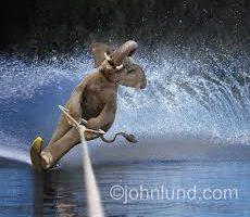Agile_Elephant